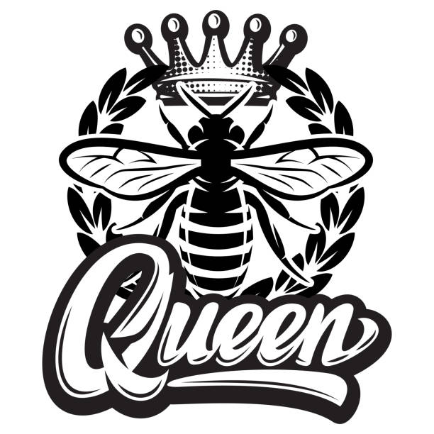 Vector pattern with flying bee, crown and calligraphic inscription - queen Vector pattern with flying bee, crown and calligraphic inscription - queen. queen bee stock illustrations