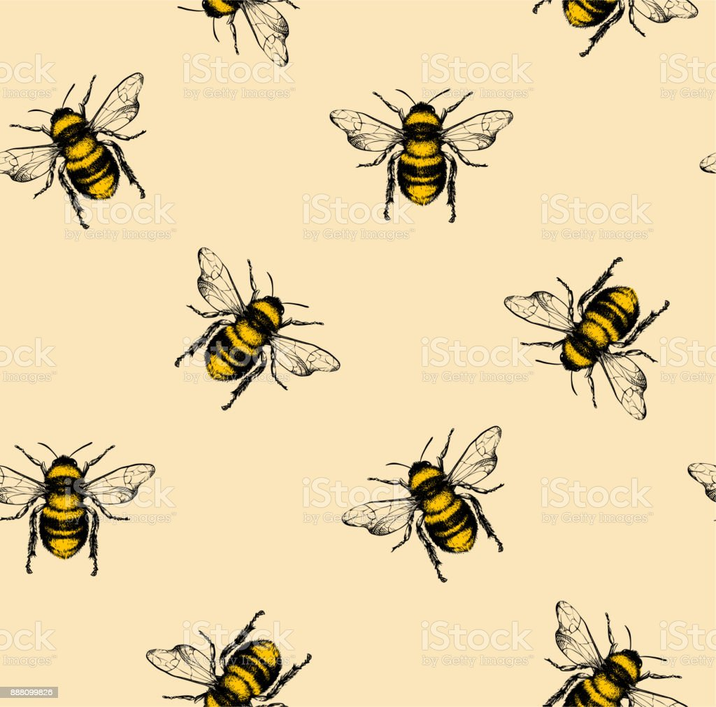 Vector pattern with honey bee. vector art illustration