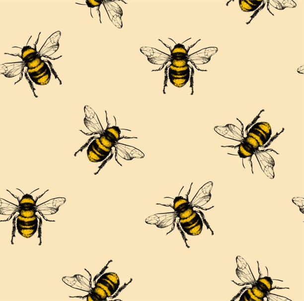 vector pattern with honey bee. - animals background stock illustrations