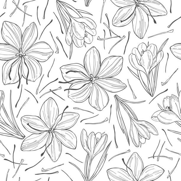 사프란 향신료와 벡터 패턴입니다. - 꽃밥 stock illustrations