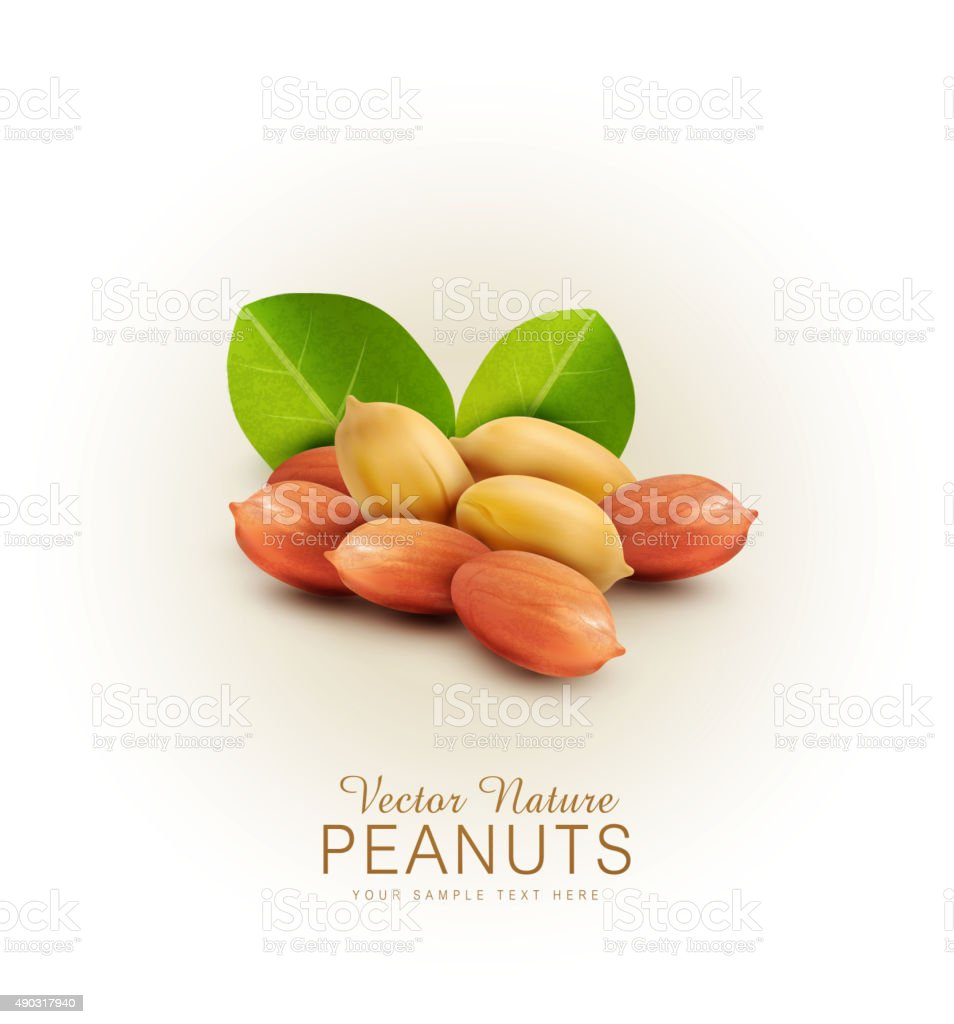 Vector peanut kernels isolated with green leaves (design element) vector art illustration