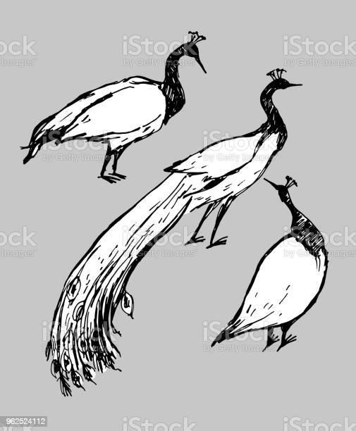 Vetores de Ilustração De Desenho Vetorial Caneta Pavão De Pássaros Preto E Branco Sobre Fundo Cinza e mais imagens de Animal