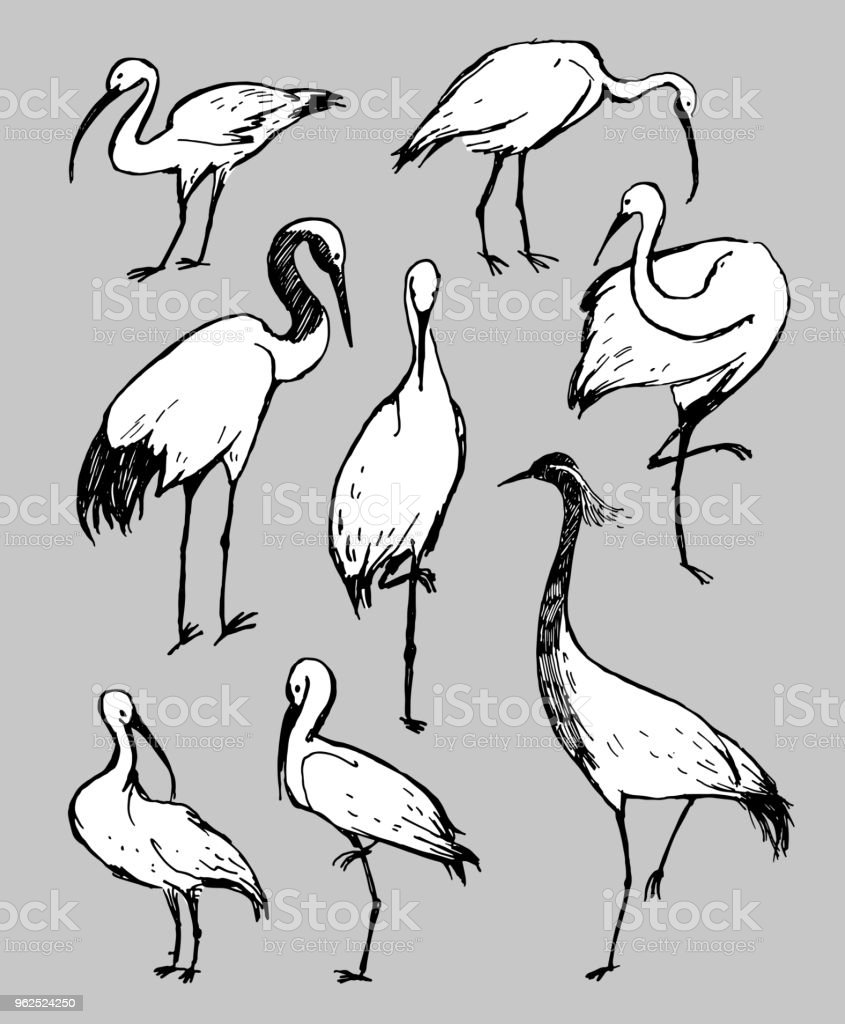 Ilustração de desenho vetorial caneta. Preto e branco aves cegonha, Garça e Picota em fundo cinza - Vetor de Animal royalty-free
