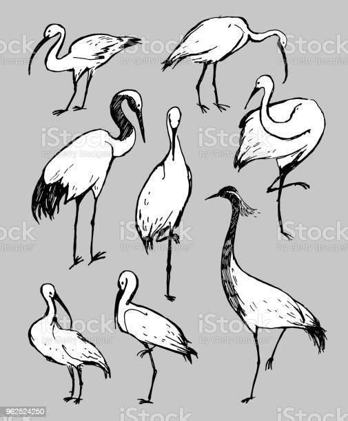 Vetores de Ilustração De Desenho Vetorial Caneta Preto E Branco Aves Cegonha Garça E Picota Em Fundo Cinza e mais imagens de Animal