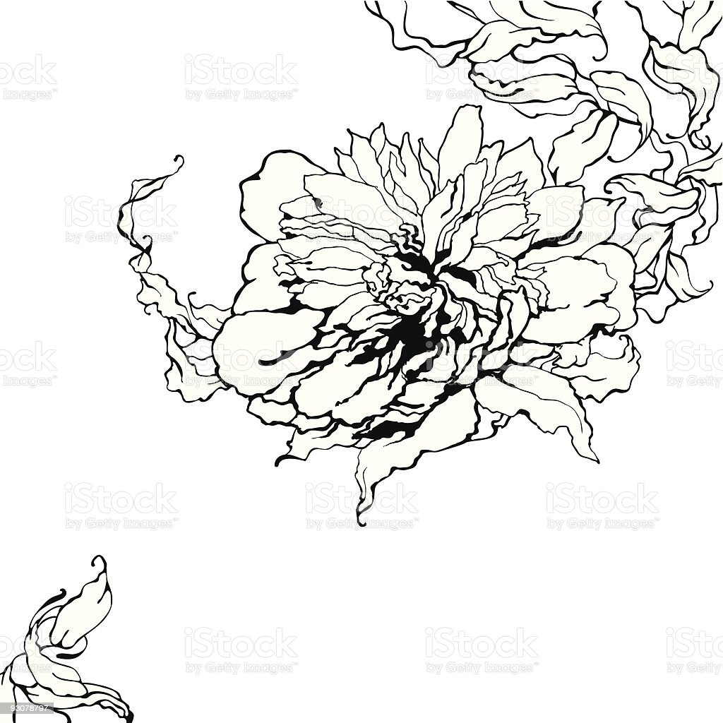Vector peony, black and White royalty-free stock vector art