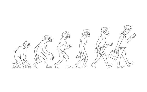 Vector evolución de la gente de mono a negocio - ilustración de arte vectorial