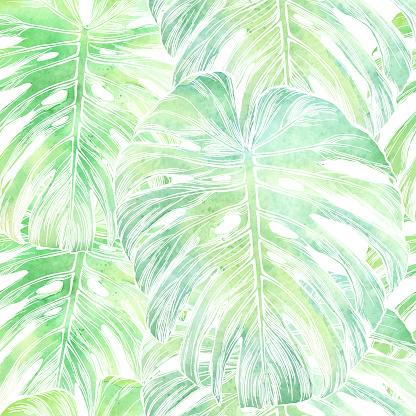 Vector Philodendron Leaf Seamless Pattern in Watercolor Isolated on White