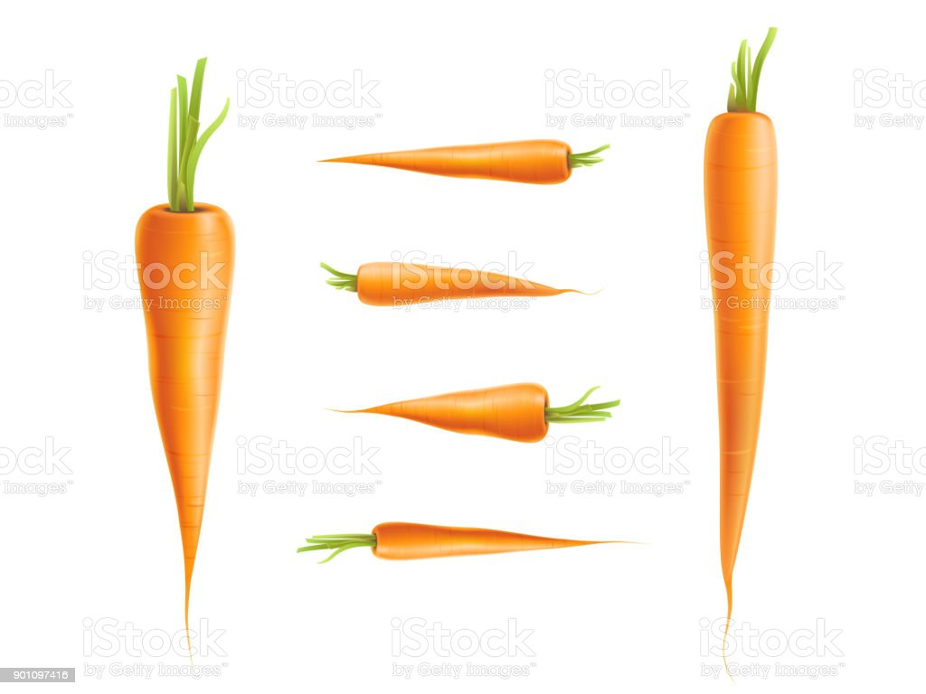 Vector photo-realistic carrot set isolated vector art illustration