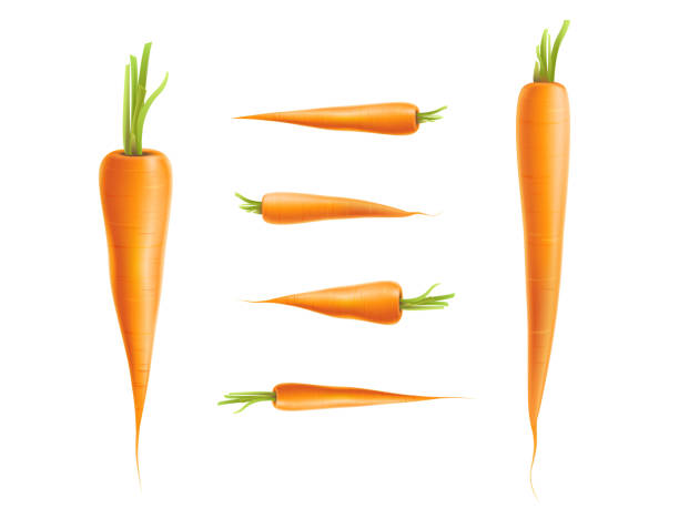 vector photo-realistic carrot set isolated - carrot stock illustrations