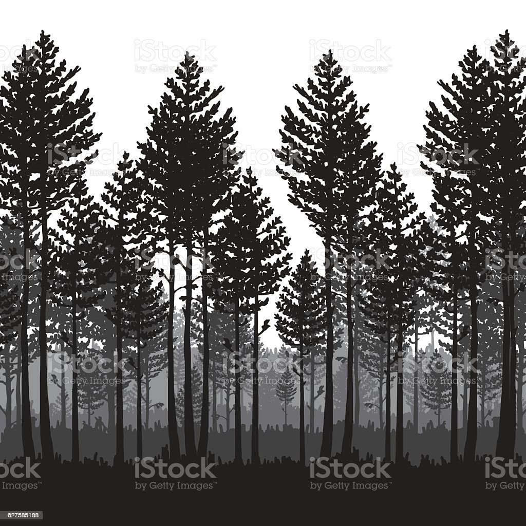 Vector Pine Forest Landscape Dark Forest With Pine Trees Stock