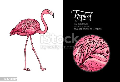 Vector pink flamingo isolated on white background. Tropical hand-drawn exotic bird. Flamingo illustration for summer poster, wallpaper, textile design, beach party decoration, logo. For print and web.