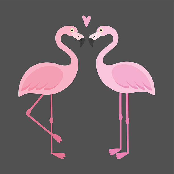 ilustrações de stock, clip art, desenhos animados e ícones de vector pink flamingos illustration - bills couple