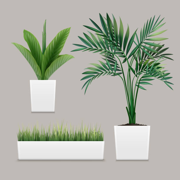 Vector plants potted Vector plants potted in container for use indoors as houseplant and decoration on gray background potting stock illustrations