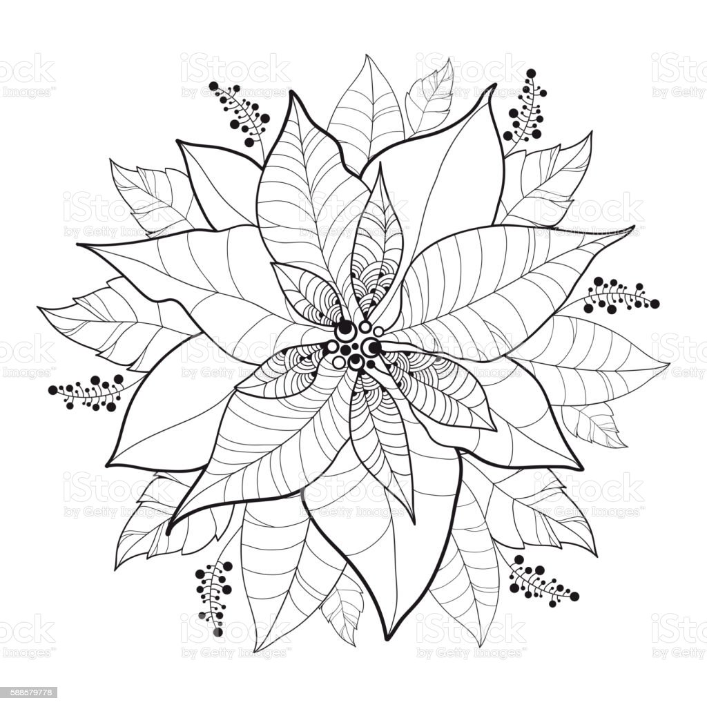 Vector Poinsettia Flower Or Christmas Star In Black Isolated ...