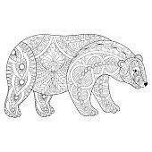 Vector polar bear head for adult anti stress coloring