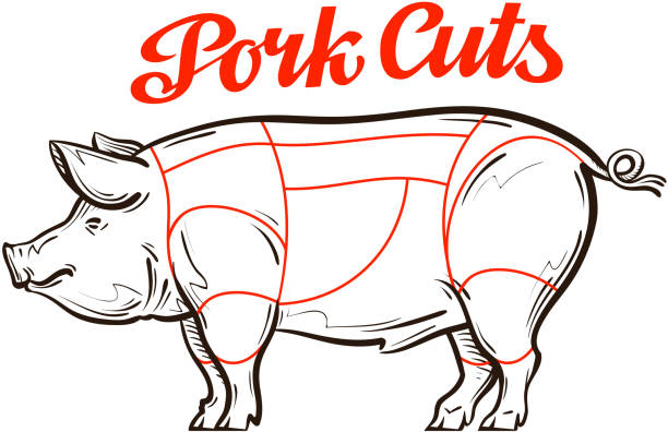 Royalty Free Pig Diagram Clip Art Vector Images Illustrations