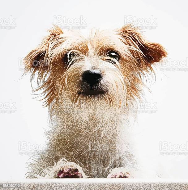 Vector portrait of a cute terrier mixed breed dog vector id533450212?b=1&k=6&m=533450212&s=612x612&h=xqxbnn9ryzype 8g2li nljbzl 4rj 4wp0aus8pfn4=