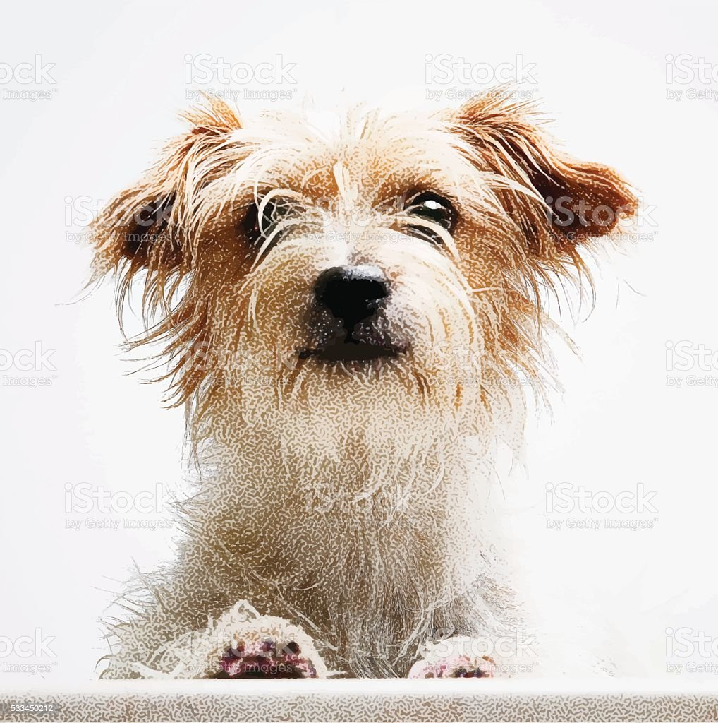 Vector Portrait of a cute Terrier Mixed Breed Dog vector art illustration