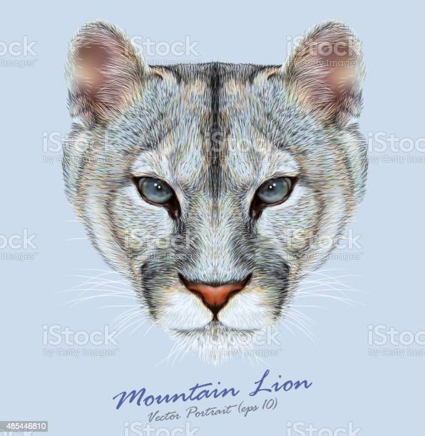 Vector portrait of a mountain lion on blue background vector id485446810?b=1&k=6&m=485446810&s=612x612&h=qzqovhfks7vn6msqxbihrhy9osoxb46qtbcfp4pcub4=