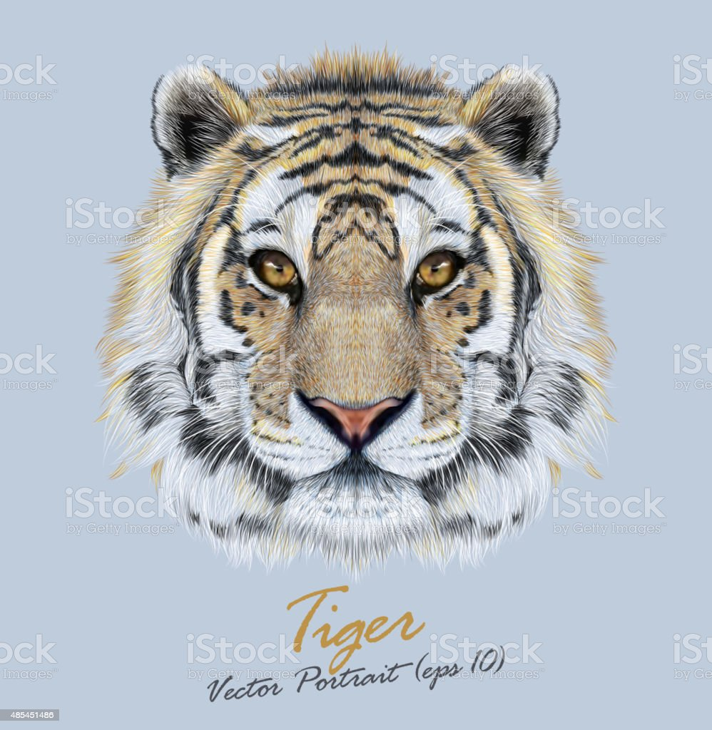 vector portrait of a tiger on blue background stock vector art