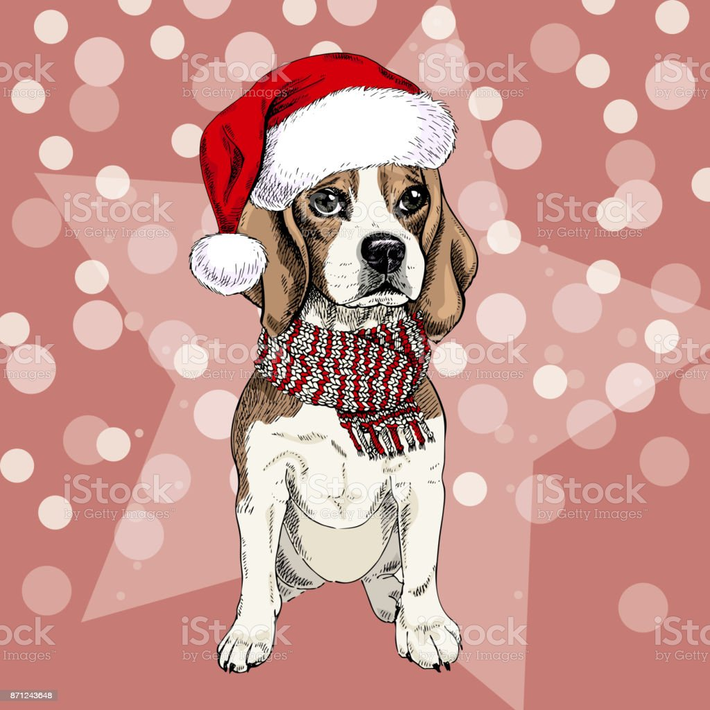 Vector Portrait Of Beagle Dog Wearing Santa Hat And Scarf Isolated ...