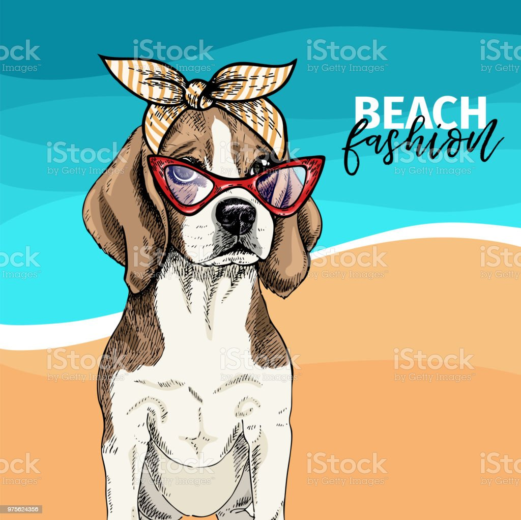 Vector portrait of beagle dog wearing sunglasses, retro bandana. Summer fashion illustration. Vacation, sea, beach, ocean. Hand drawn pet portait. Poster, t-shirt print, holiday, postcard, summertime