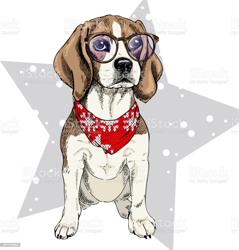 Vector Portrait Of Beagle Dog Wearing Winter Bandana And Glasses ...