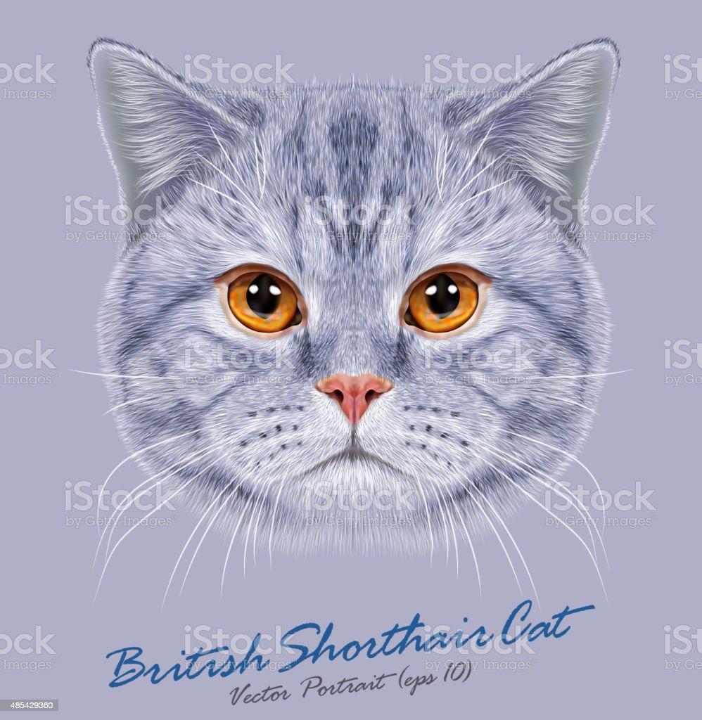 Britische kurz haare katze