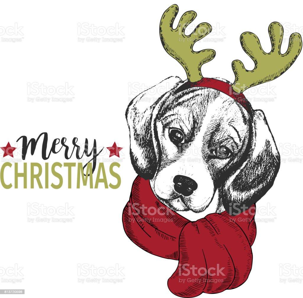 Retrato de vectores de Navidad perro. Cuerno de los ciervos usan de perro beagle borde y bufanda. Cartel de la Navidad, decoración. - ilustración de arte vectorial