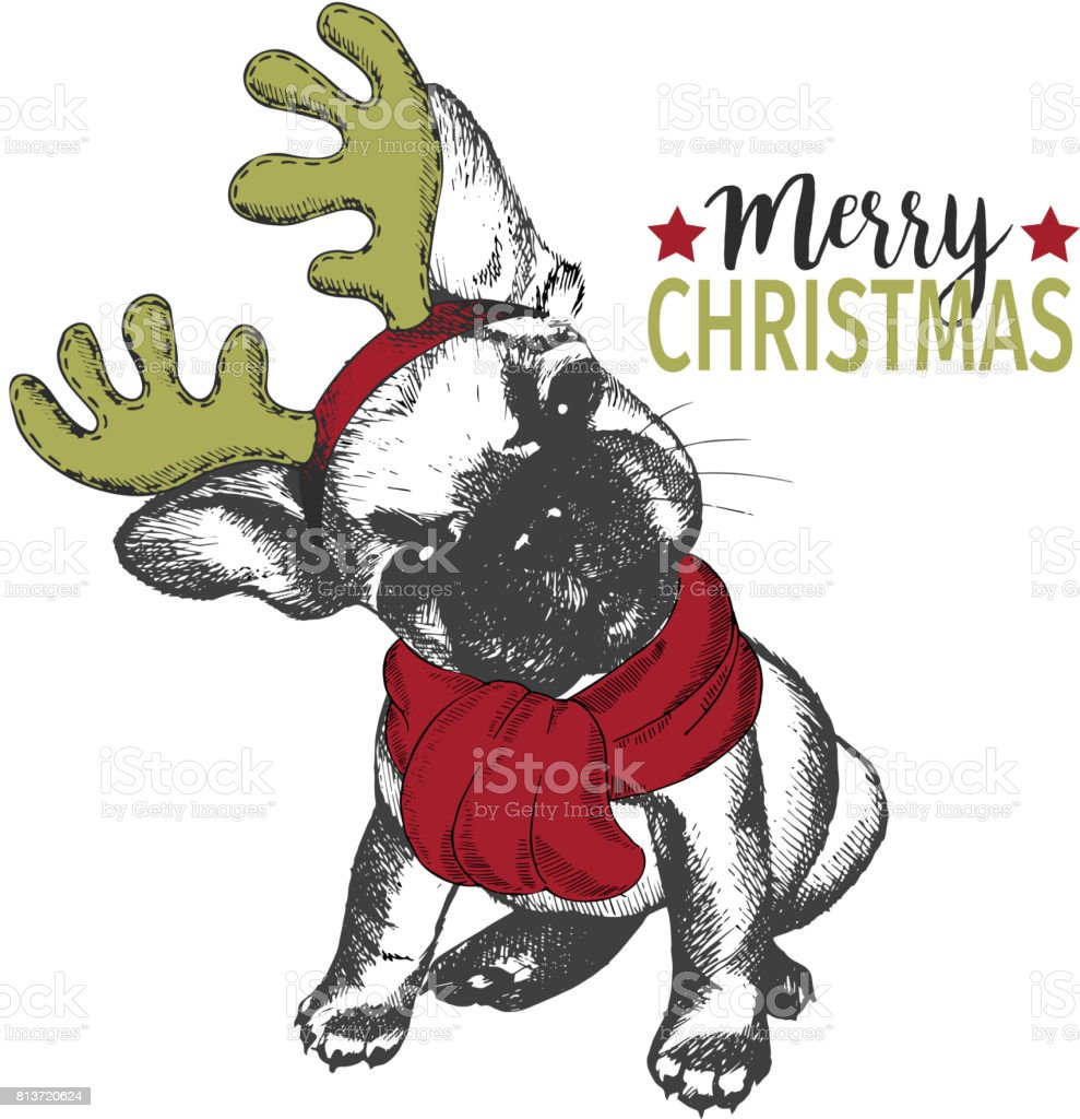 vector portrait of christmas dog french bulldog dog wearing deer horn rim and scarf