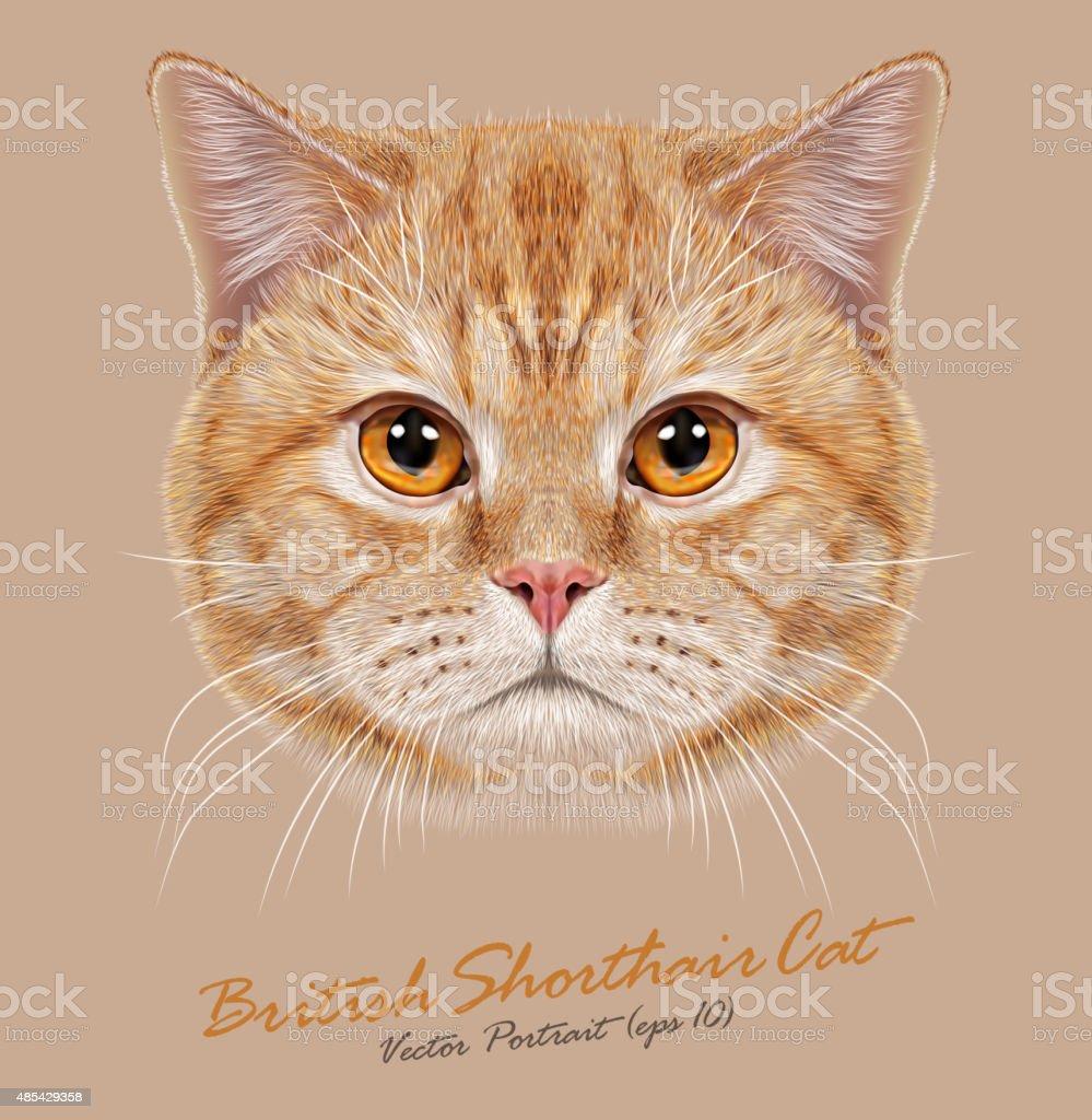 Vector Portrait of Domestic Cat vector art illustration