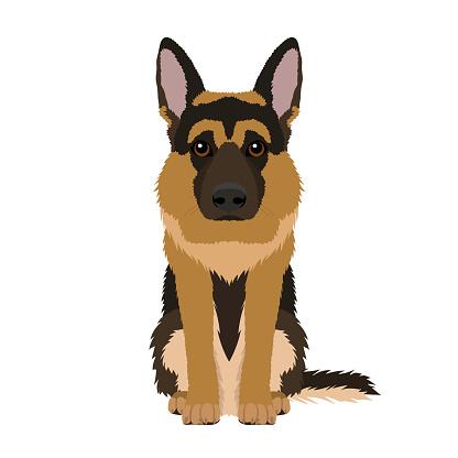 Vector portrait of German Shepherd