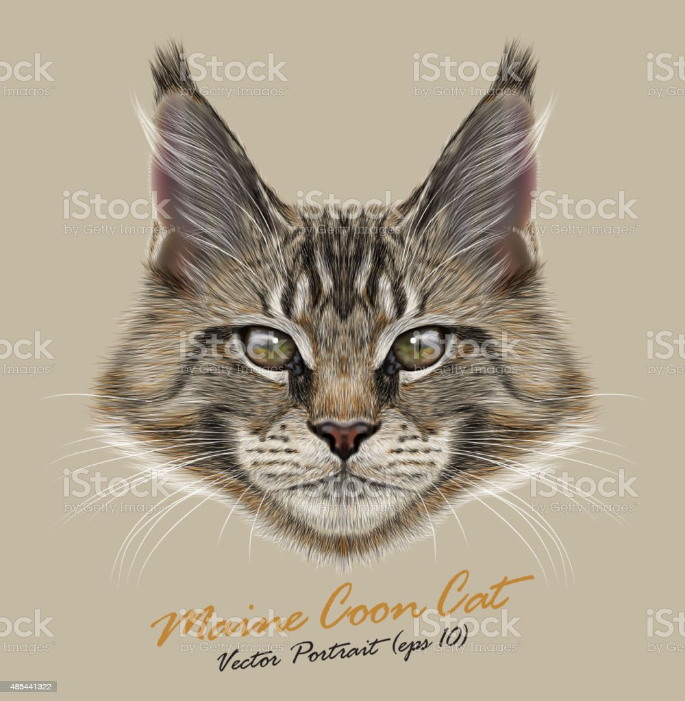 Vector portrait of Maine Coon Cats vector art illustration