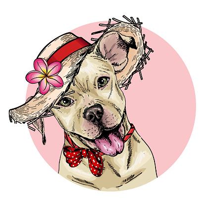 Vector portrait of pit bull terrier dog wearing straw hat, flower and polka dot bandana. Summer fashion illustration. Hand drawn pet portait. Poster, t-shirt print, holiday, postcard, summertime.