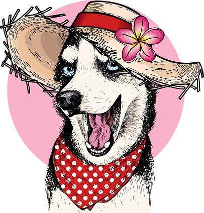 Vector portrait of Siberian husky dog wearing straw hat, flower and polka dot bandana. Summer fashion illustration. Hand drawn pet portait. Poster, t-shirt print, holiday, postcard, summertime