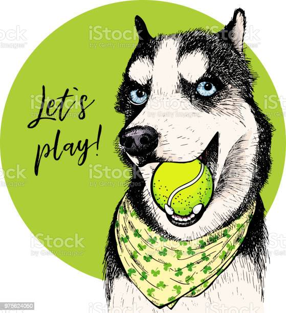 Vector portrait of siberian husky dog with tennis ball let s play vector id975624050?b=1&k=6&m=975624050&s=612x612&h=4gabrcnm8 dkcf 9rdqzznyjkymk9hnilga08cz8ivo=