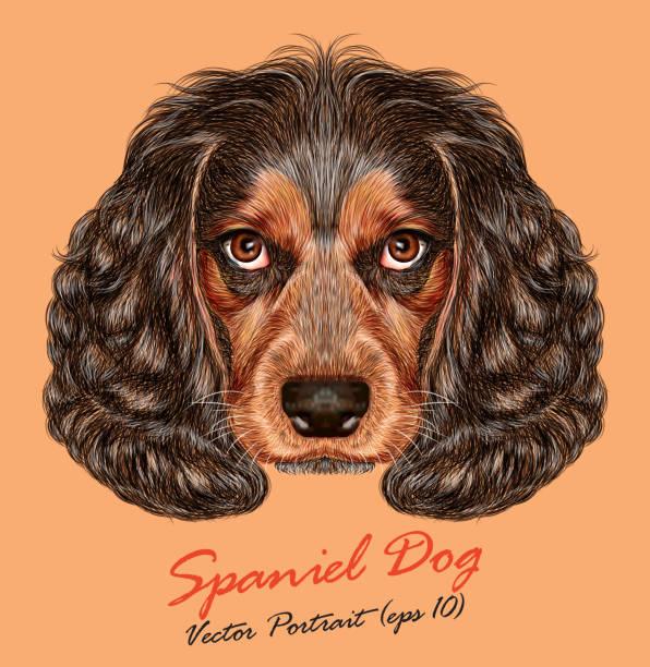 vektor porträt von spaniel hund - hundehaarbögen stock-grafiken, -clipart, -cartoons und -symbole