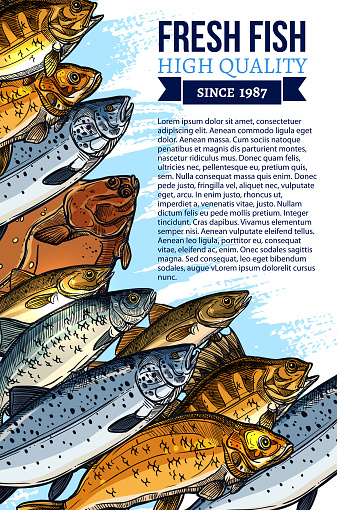 Vector poster for fresh fish or seafood market