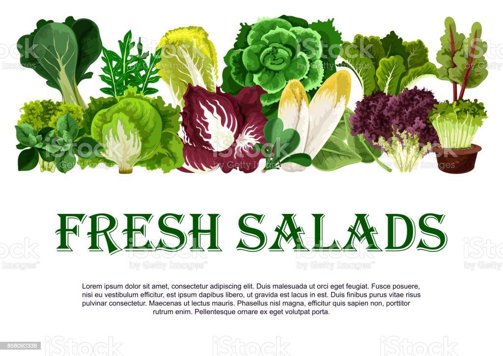 Cartaz de vetor de vegetais folhosos de saladas frescas - ilustração de arte em vetor