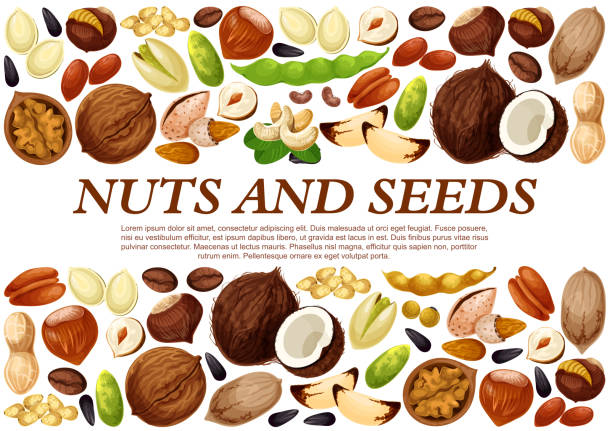 vector poster of nuts and fruit seeds - plant pod stock illustrations