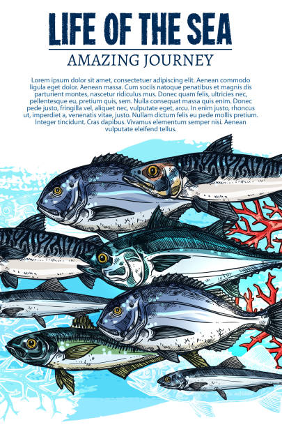 vektor-plakat von fisch skizze meer fische leben im meer - seehecht stock-grafiken, -clipart, -cartoons und -symbole