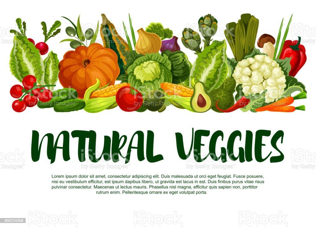 Vector poster of vegetables or veggies harvest vector art illustration