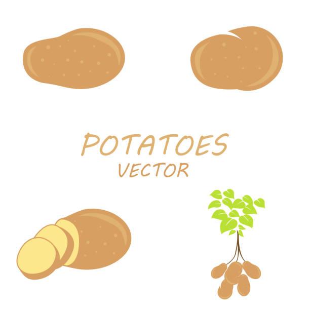 vektor-icons set kartoffeln - kartoffeln stock-grafiken, -clipart, -cartoons und -symbole