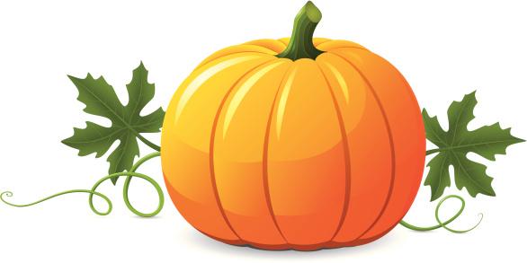 Vector pumpkin illustration on white background