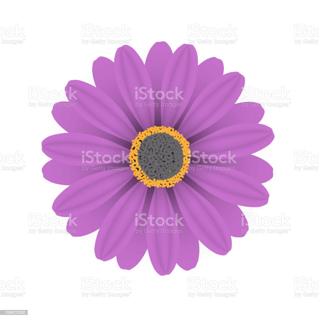 Vector purple flowers on a white background stock vector art more vector purple flowers on a white background royalty free vector purple flowers on a mightylinksfo