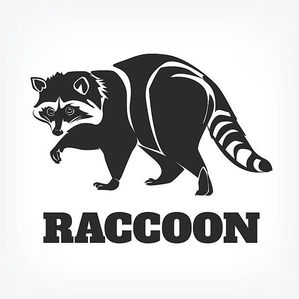 vector raccoon black illustration - raccoon stock illustrations