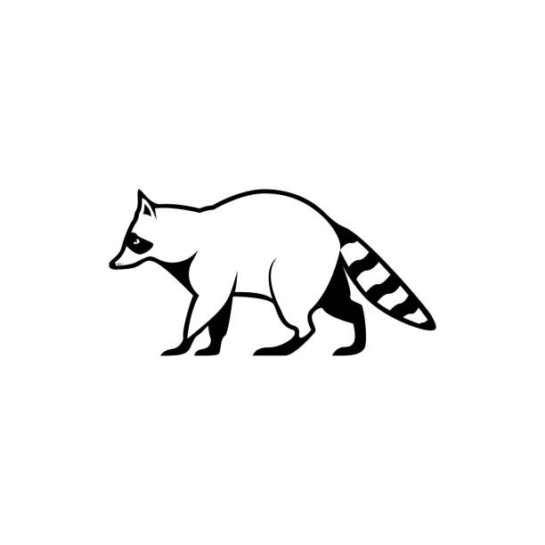 Vector raccoon silhouette view side for retro icons, emblems, badges, labels template vintage design element. Isolated on white background Vector raccoon silhouette view side for retro icons, emblems, badges, labels template vintage design element. Isolated on white background raccoon stock illustrations