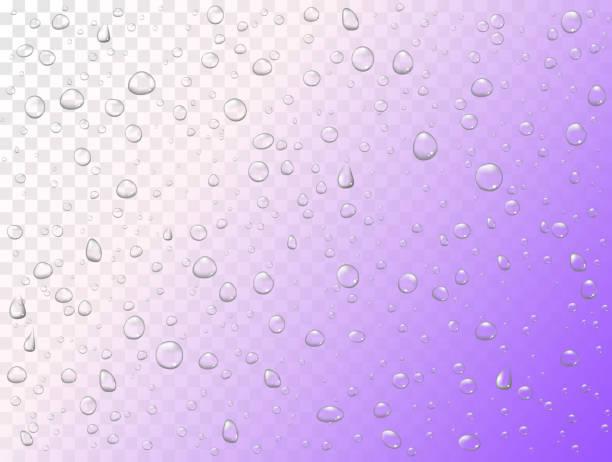 ilustrações de stock, clip art, desenhos animados e ícones de vector rain water drops on transparent background. pure droplets condensed. realistic pattern on window glass surface - macro