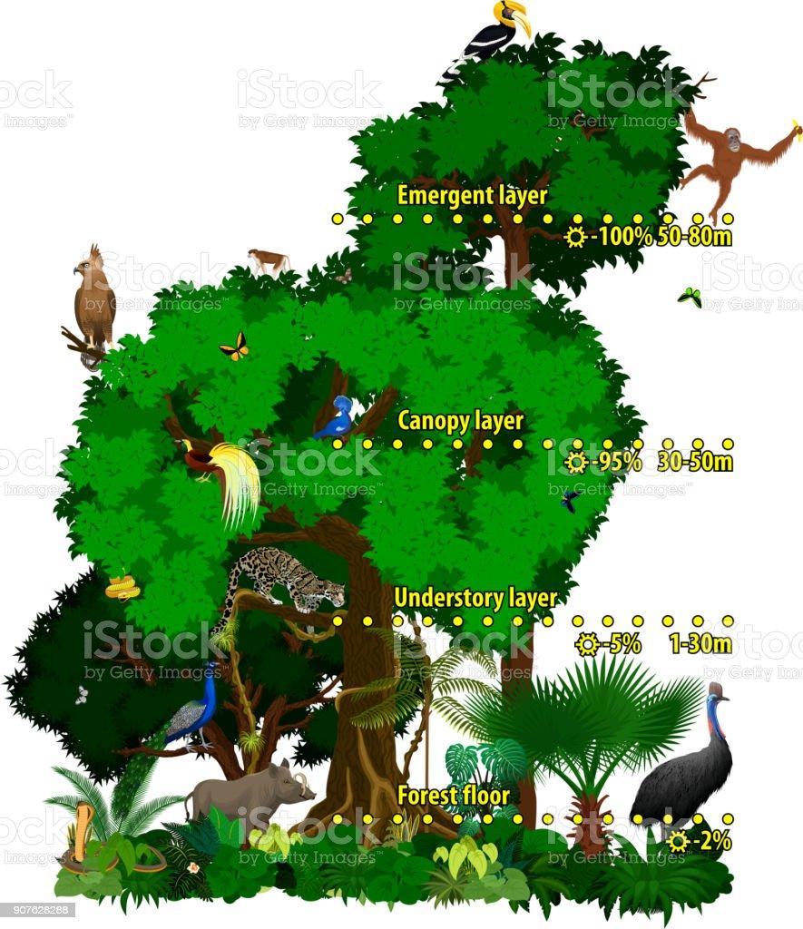 Vector Rainforest Indonesian Jungle Layers Vector Illustration