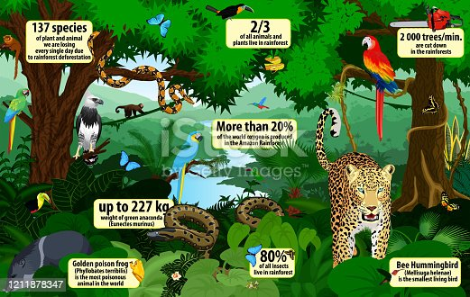 istock vector rainforest  infographic with animals illustration . Green Tropical Forest jungle with parrots, jaguar, boa, peccary, harpy, monkey, frog, toucan, anaconda and butterflies 1211878347